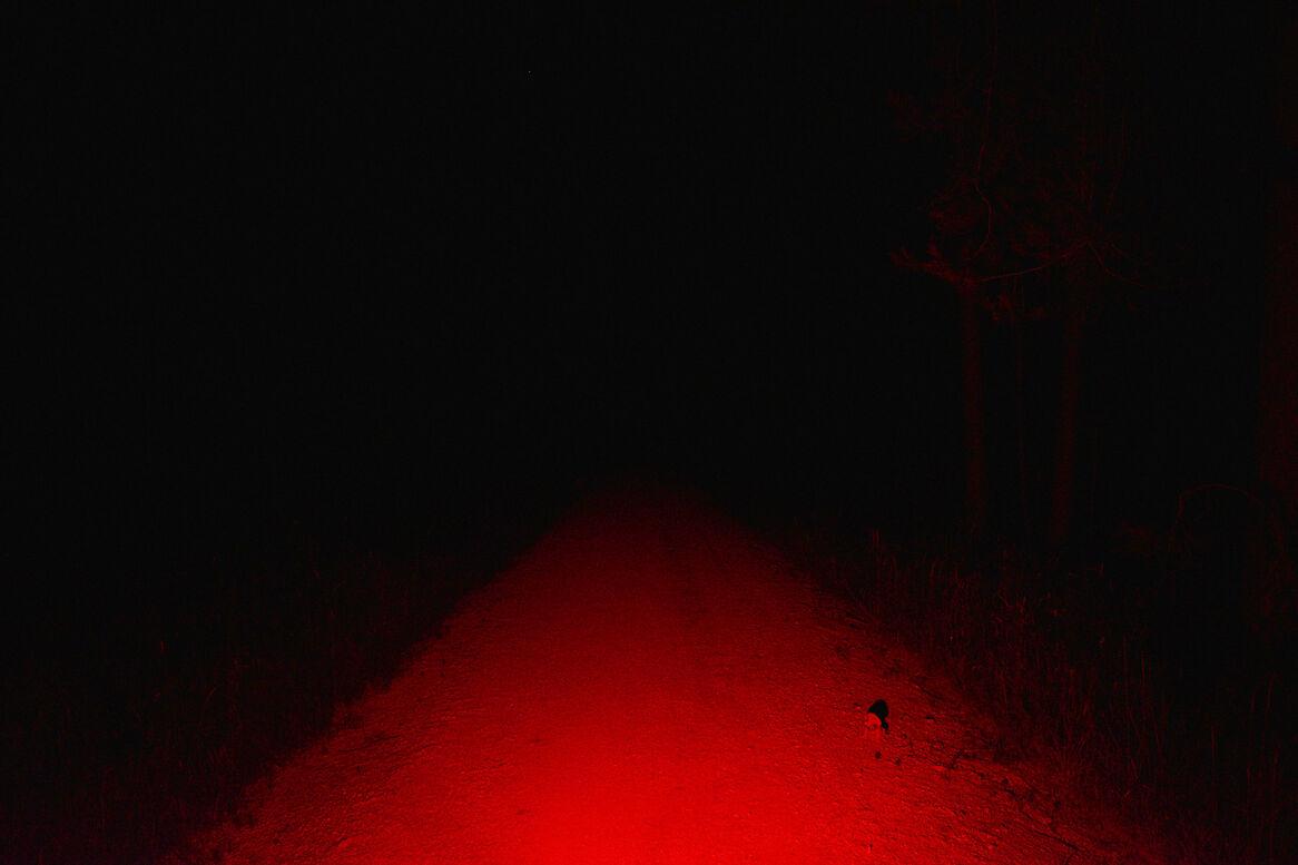 Rotlicht Rotlicht
